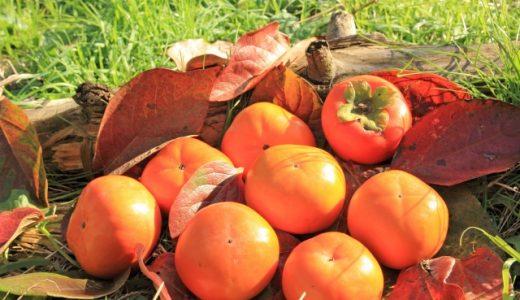 ふるさと納税の柿ランキング!みずみずしくて甘い柿がお家に届きます