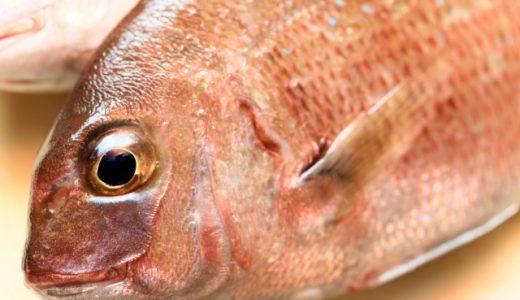 ふるさと納税おすすめ鯛ランキング~絶品鯛茶漬け・鯛めしもあります